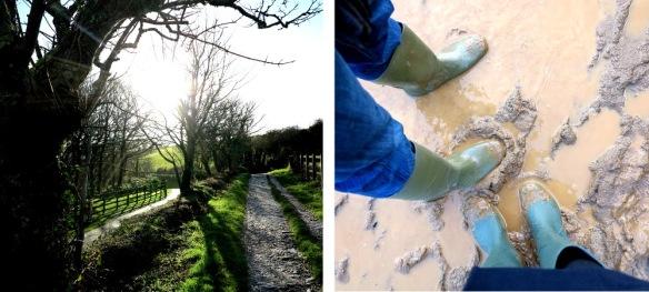 cornwall country walk